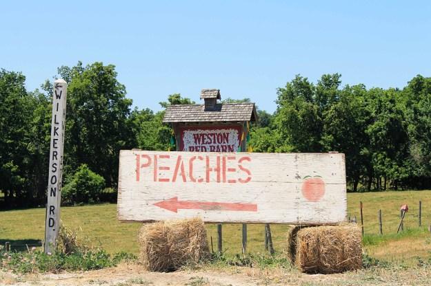 Peaches at Weston Red Barn Farm in Weston, MO